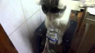 Кот и водка.  A Cat & Vodka.