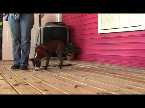 How To Modify Aggressive Behavior In Dogs With A Clicker
