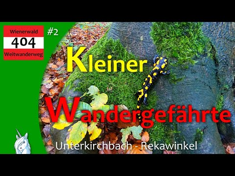 Wienerwald Weitwanderweg 404 - Unterkirchbach -Tulbinger Kogel/Troppberg- Rekawinkel - Wandern In NÖ