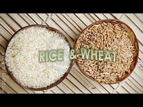 The difference between Rice & Wheat