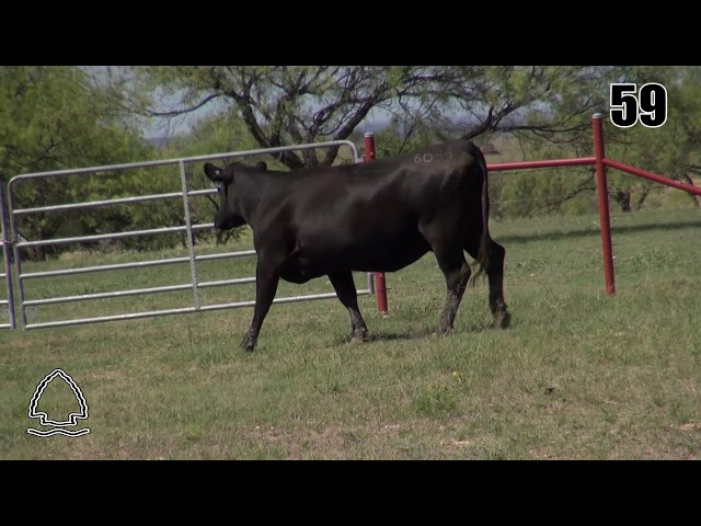 Pearcy Angus Ranch Lot 59