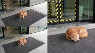 Aspetta per giorni il padrone davanti all& 39 ospedale Il cane che ha commosso l& 39 Italia