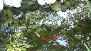 PetSmart rescued feeder fish celebrate One Year of Life