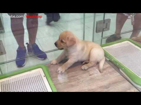 Dogs Puppies | So Cute playing | Hong Kong china | Pet shop in Ladies Market