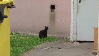 Черный кот шредингера - попытка не пытка