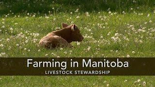 Farming in Manitoba: Livestock Stewardship