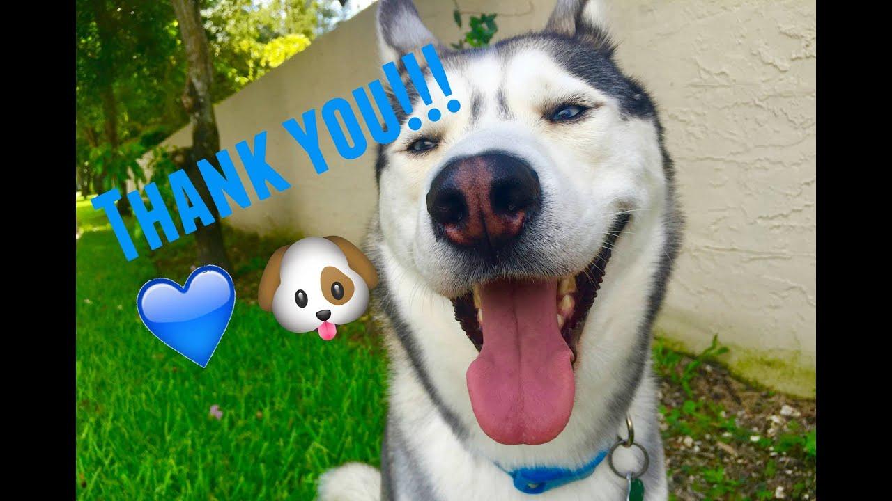 FAN VIDEO! WE APPRECIATE YOU!