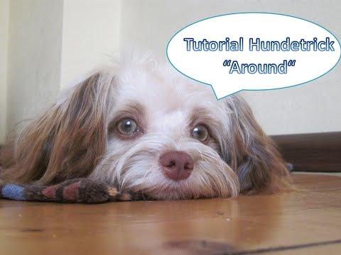 Tutorial Hundetrick 'Around' Drehung am Bein