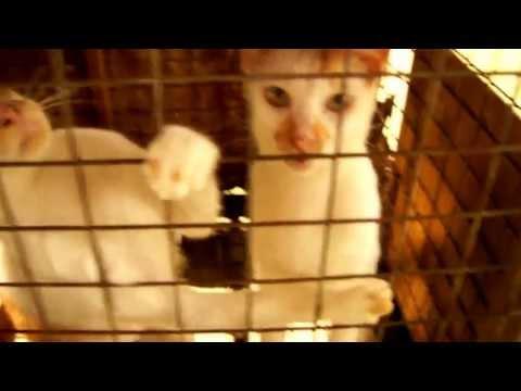 The life as a cat in Brunei Darussalam