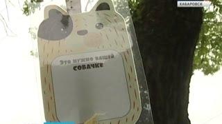 Вести-Хабаровск. Пакеты для собак