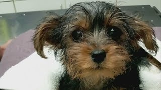 Toronto police search for man who left puppy in a garbage can