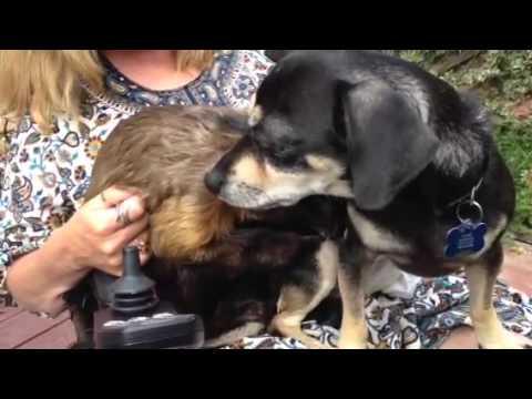 Monkey grooming family dog