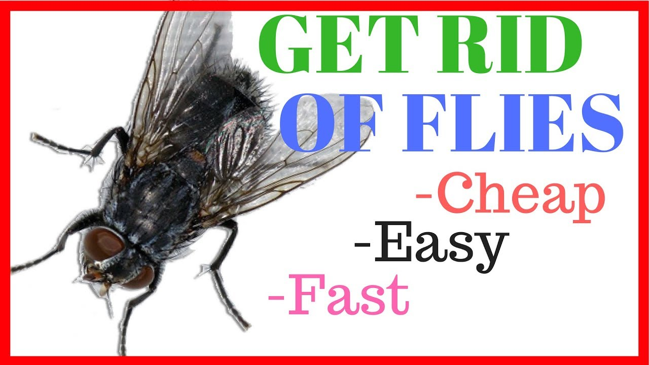 Get Rid of House Flies - Cheap, Easy, & Fast - YouTube