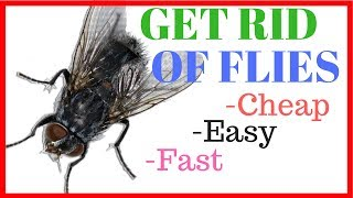 Get Rid of House Flies - Cheap, Easy, & Fast