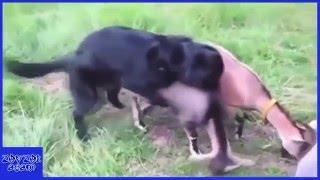 Komik çiftleşen hayvanlar