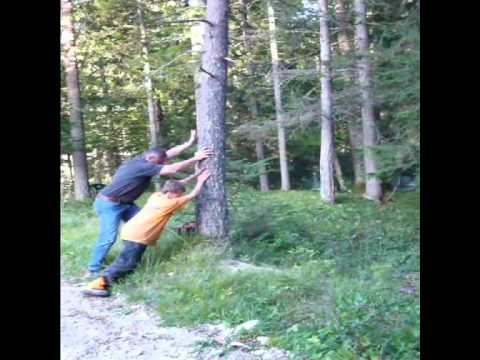 Achtung, Baum Fällt! - Rainer In Action