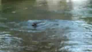 川で遊ぶ.