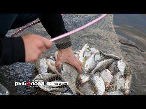 прогноз клева рыбы в маяках одесской