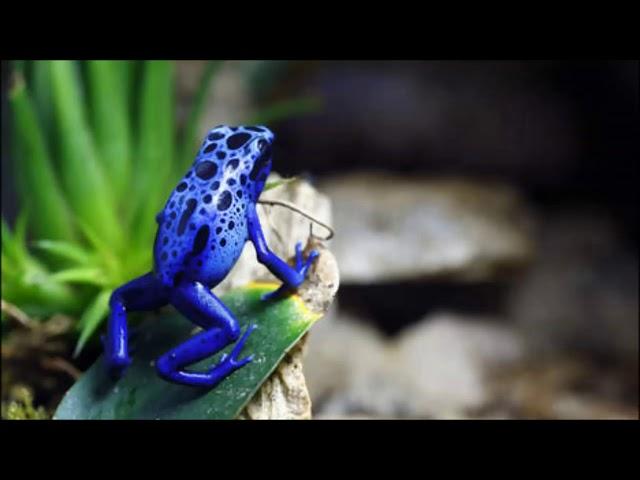 Powl Ameerali - Ef' a kan (Suripop)