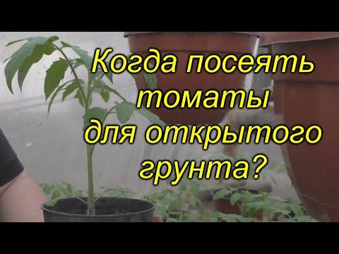 Когда сеять томаты для открытого грунта (для любого региона)? Не ошибитесь!!! | низкорослые | выращивание | помидоров | помидоры | открытый | томатов | посеять | томаты | своими | руками