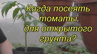 Когда сеять томаты для открытого грунта (для любого региона)? Не ошибитесь!!!