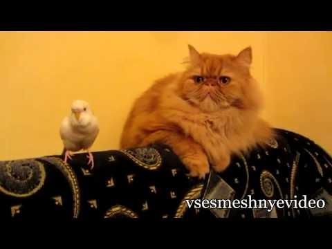 Смешные Кошки: Подборка Приколов С Кошками (часть 1)