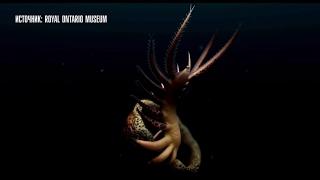 Древний голый червь с опасными конечностями обнаружен в Канаде