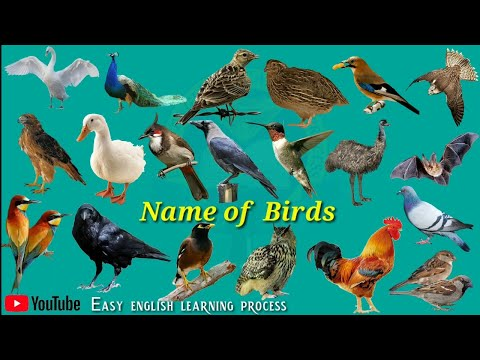 Name Of Birds |Birds Name Hindi & English Language |Birds Name English|Easy English Learning Process