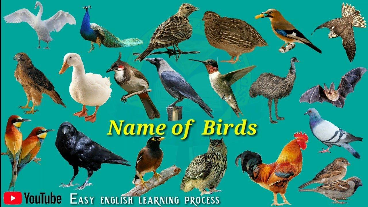 Nickname English