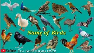 Name of Birds |Birds Name Hindi & English language |Birds name english|Easy english Learning process