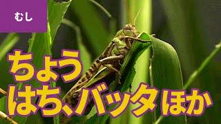 虫・昆虫(1)里山の昆虫 □登場する虫・昆虫:モンシロチョウ/モンキチ...