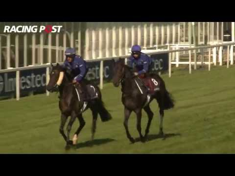 2016 Investec Derby Preview