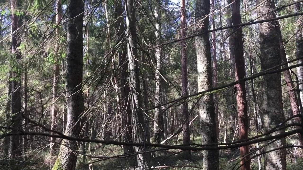 Filosofía en el bosque 2. Realismo y percepción.
