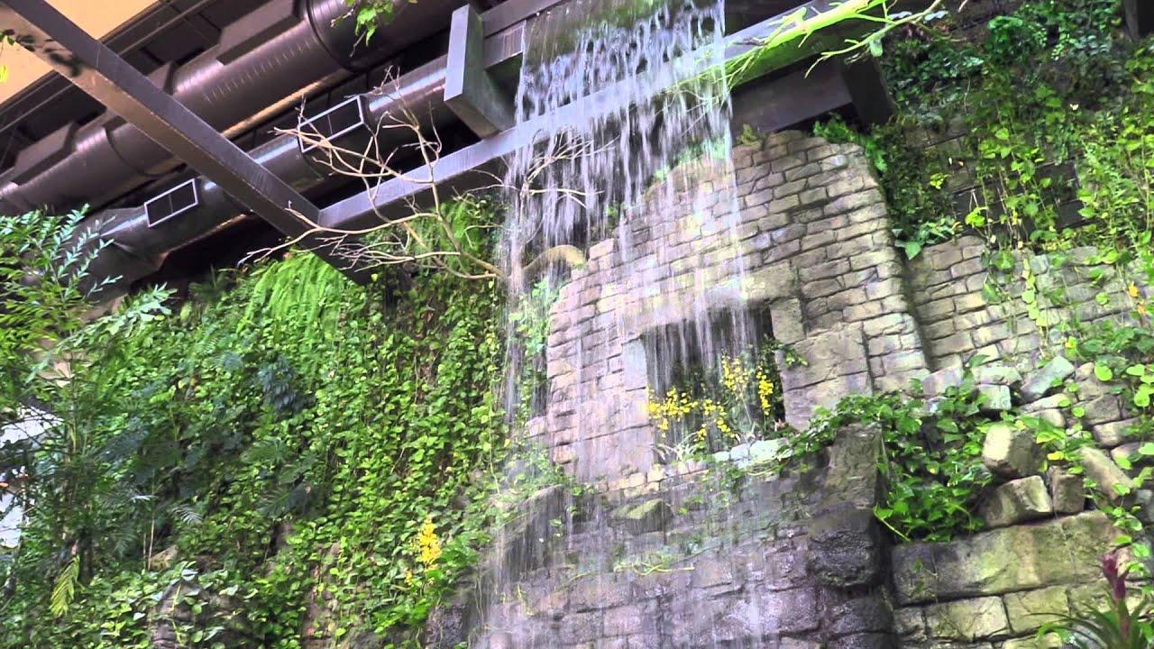 Plants Rainforest Cleveland Metroparks Zoo