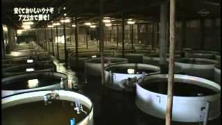 Ripple Fish   Japanese delegation at our farms