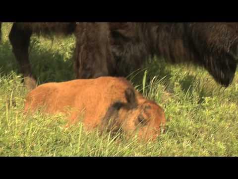 Salina Kansas Tourism Video