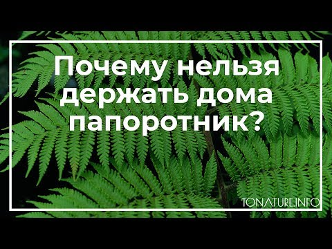 Почему нельзя держать дома папоротник? | toNature.Info