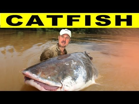 Video Catfish movie amazon