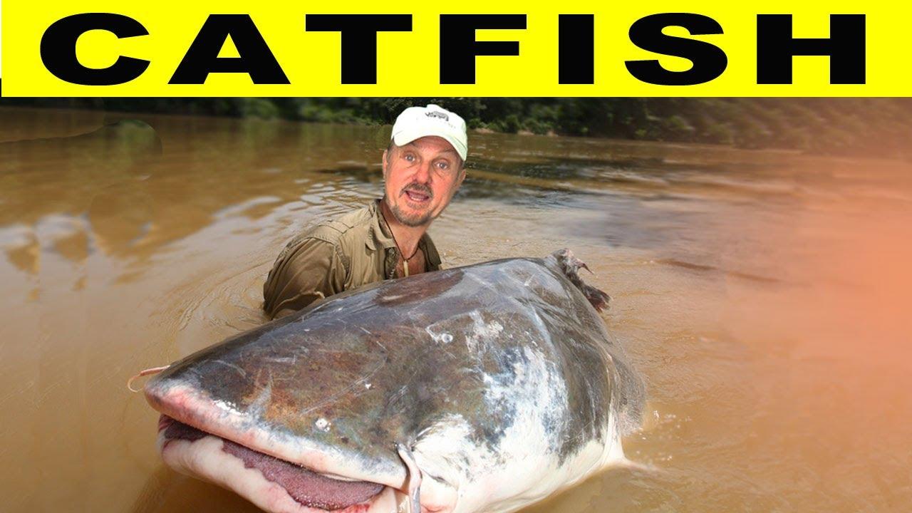 crazy catfish amazon river monsters youtube