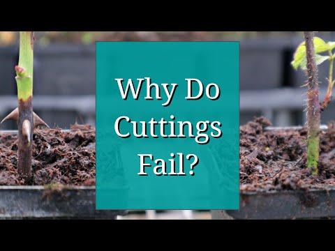 Why Do Cuttings Fail? Propagation Tips