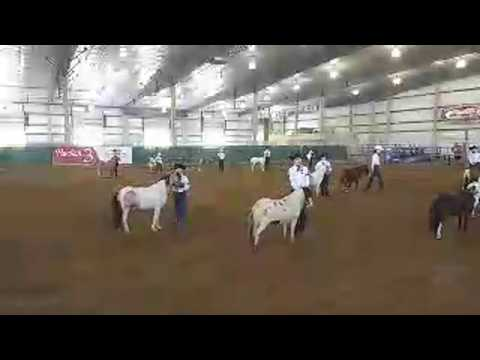 2019 Lancaster County Super Fair - 4-H Miniature Horse Show