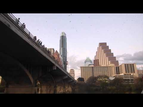 Congress Avenue Bridge Bats, March 2015