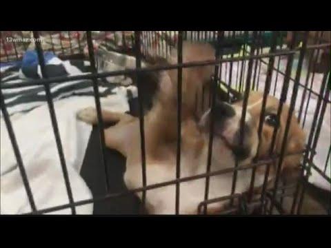 Georgia Animal Shelters At Capacity