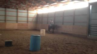 "AQHA Western Pleasure Gelding for sale ""Open for Temptation"""