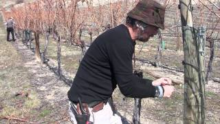 Pruning on Mt D