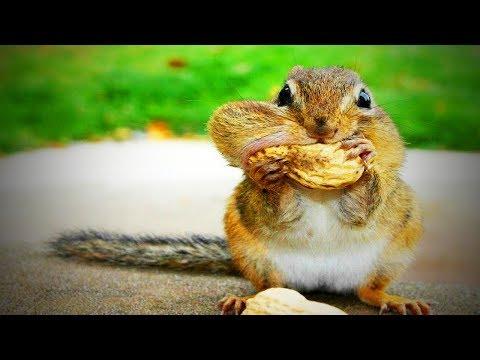 Funny Squirrels 😍 Funny and Cute Squirrels (Part 2) [Funny Pets]