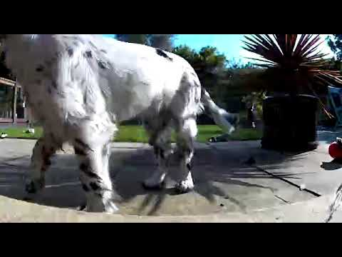 Arlo Go sample daylight footage