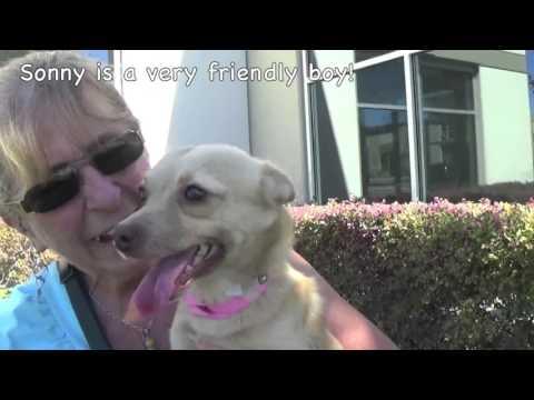 October Shelter Dog Adoption Month! Special $16 Adoption Fee!