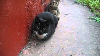 Черный кот и кошечка