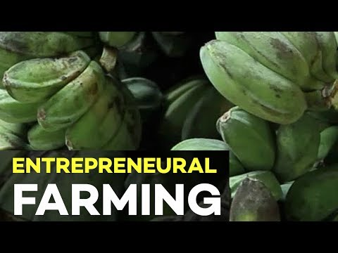 Agribusiness and Entrepreneurship: Farmers Must Have High In